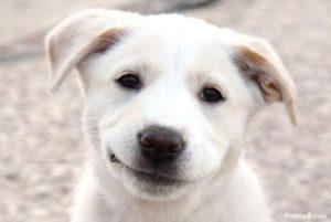 Adozioni canile Dog Paradise